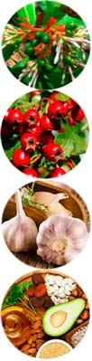 Cardiocidin состав